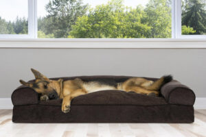 Reasons you need to choose Woven Pet bed